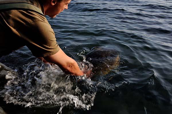 Wil je als visser echt vooruit dan moet je 100% vertrouwen hebben in de boilies die je gebruikt!(Een dikke vijftiger van openbaar water. Een van de tien vissen die ik gelijk in de eerste sessie op een nieuw water wist te vangen